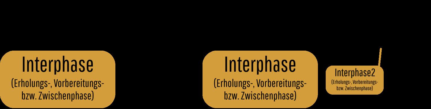 GeroMovie.com - Lehrvideos - Biologie - Zellzyklus und Zellteilung ...